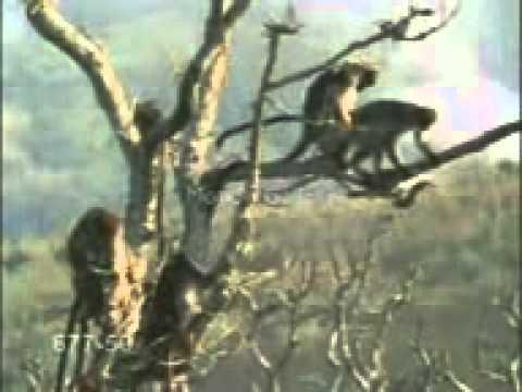 bonobo orgiaingyenesen letölthető fekete szex videók