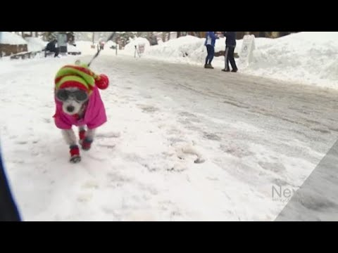 When Does It Get Too Cold To Snow? Never. Here's Why.