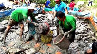 Thu hoạch lươn nuôi trong bồn tại ấp Vĩnh Phước, Vĩnh Bình, Châu Phú, An Giang 23/01/2018