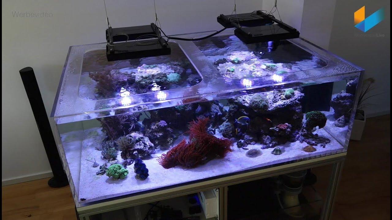 5 5 wir bauen ein meerwasser aquarium showtank tutorial. Black Bedroom Furniture Sets. Home Design Ideas