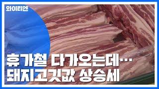 심상치 않은 돼지고깃값...아프리카돼지열병 영향 / YTN