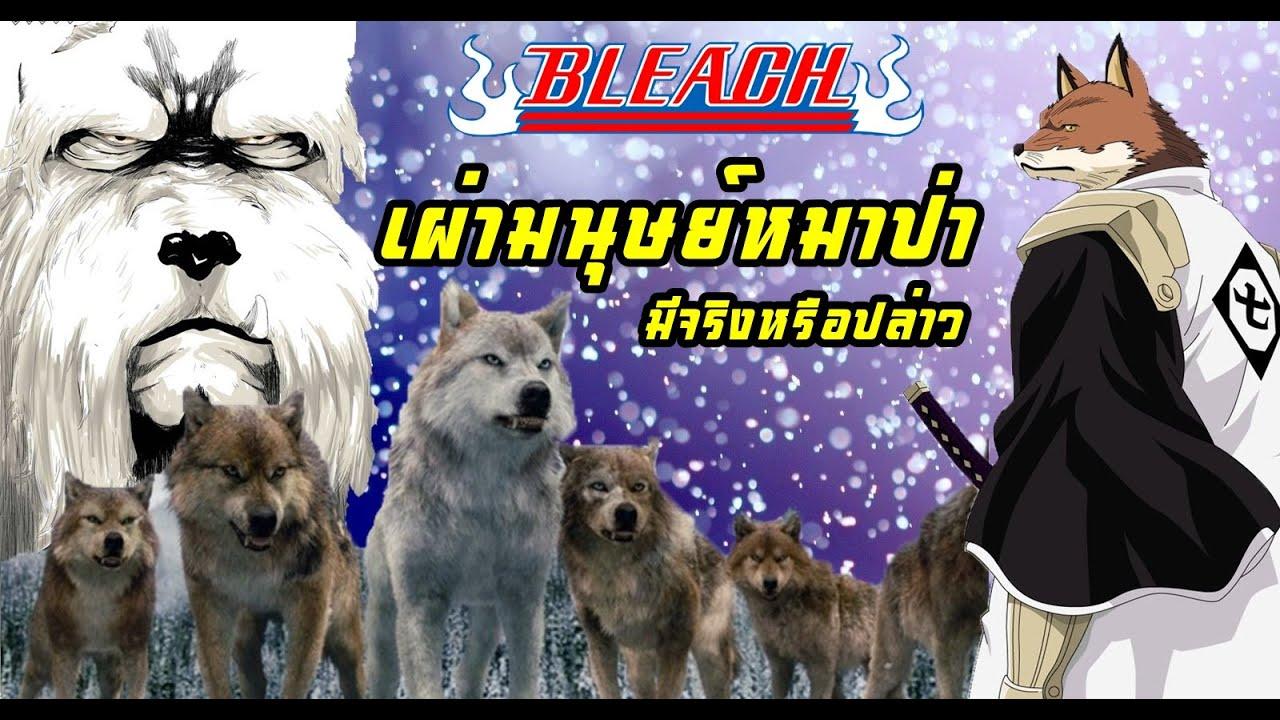 bleach แค่อยากเล่า EP.4 เผ่ามนุษย์หมาป่า (มีจริงในบลีชหรือปล่าว)
