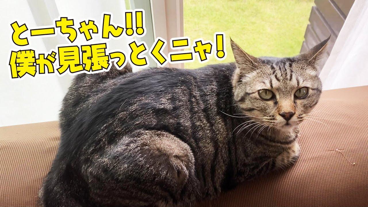 窓の外から知らない猫の声が聞こえてきた!
