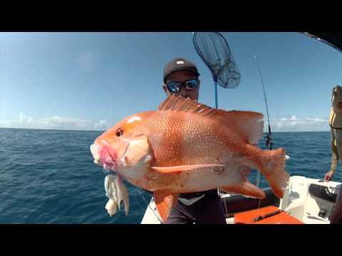 Red Emperor Fishing In Yeppoon Tightlines 2015
