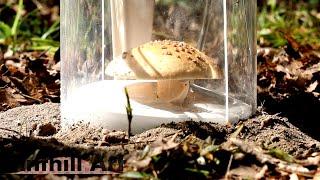 Casting a Mushroom with Molten Aluminum (Cast #091)