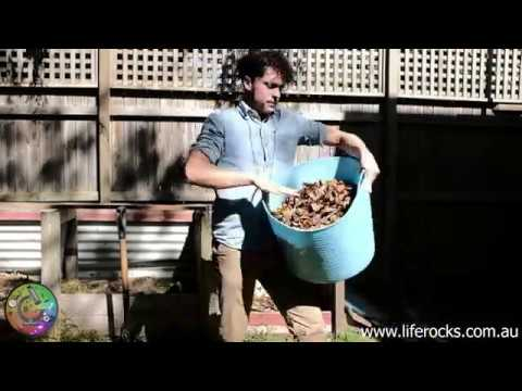 Collecting Autumn leaves for compost