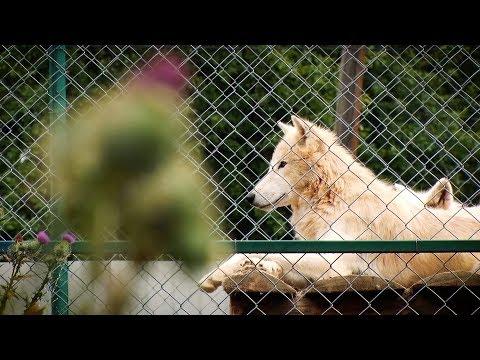 Любов до тварин – як покликання. Чого ви не знали про унікальний еко-парк «Долина вовків»?