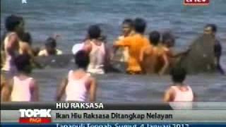 TOPIK ANTV Ikan Hiu Raksasa Ditangkap Nelayan