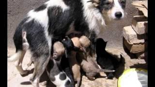 Видео про бездомных собак и других животных