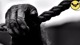 5 Comportamientos Mas Extraños En Animales Que La Ciencia Sigue Sin Explicar.