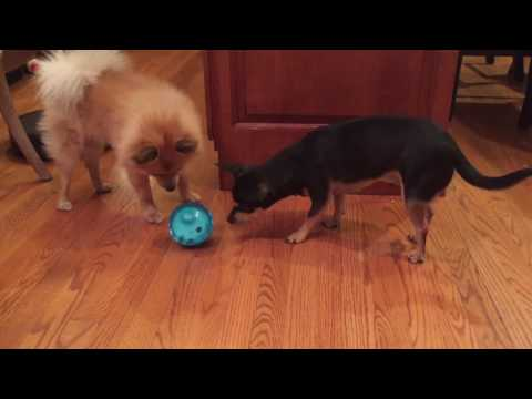 OUR PETS SMARTER INTERACTIVE IQ TREAT BALL DOG TOY - MESSI VS RONALDO