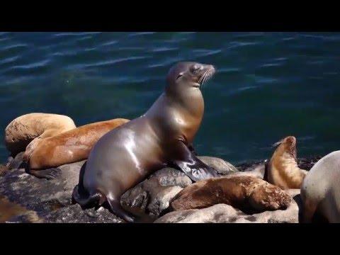 Enjoy Living 4 Blocks from the Pacific Ocean at Beautiful La Jolla, California...