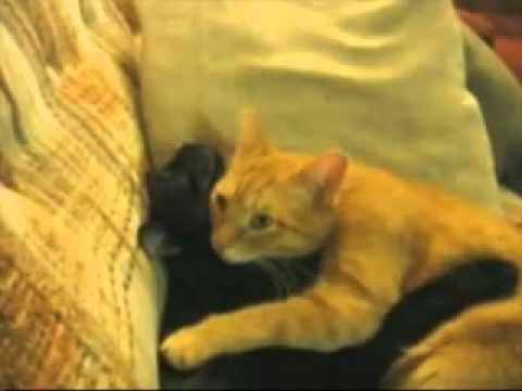 Все самое интересное и смешное о кошках