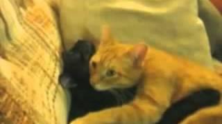 Все самое интересное и смешное о кошках(, 2010-12-22T14:41:16.000Z)