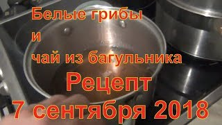 Завтрак из белые грибы с червячком и чай из багульника белый гриб багульник 07 09 2018 рецепт дома