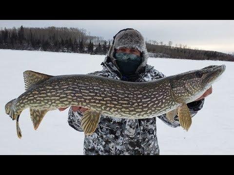 Northern Pike Ice Fishing Tactics