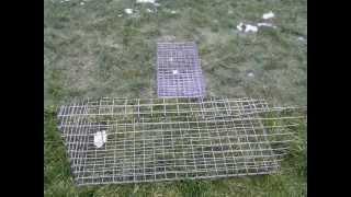 Живоловка сетка.wmv(Для отлова грызунов- крыс и других вредителей надежная и очень эффективная живоловка крысоловка, ловушка...., 2013-01-21T18:29:24.000Z)