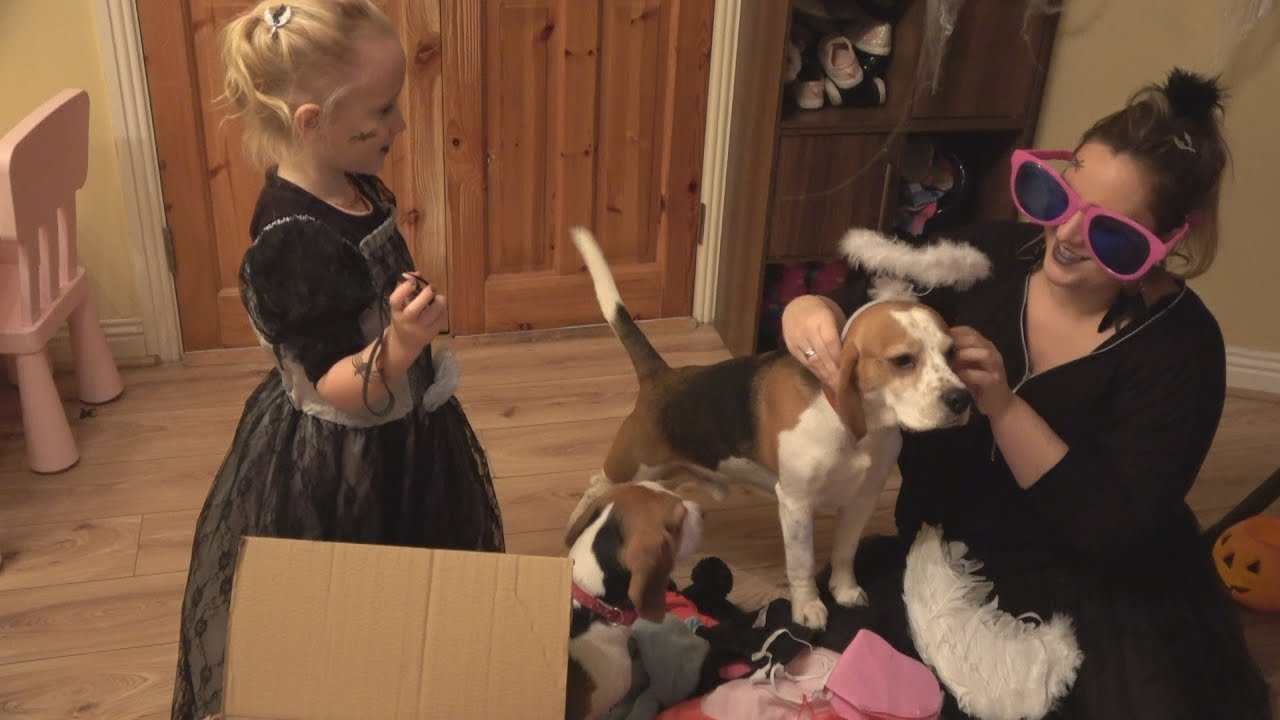 Laura Opens a Box with Costumes Our Dogs and Baby Try On Halloween Costumes & Laura Opens a Box with Costumes: Our Dogs and Baby Try On Halloween ...