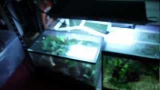 my reptile amphibian room