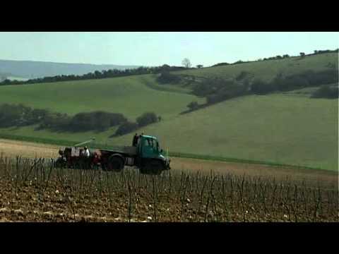 UK wine industry begins to develop