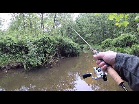 TINY Creek TROUT Fishing