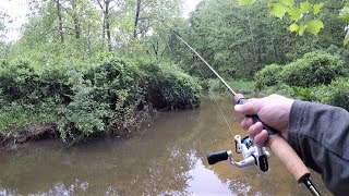 TINY Creek TROUT Fishing