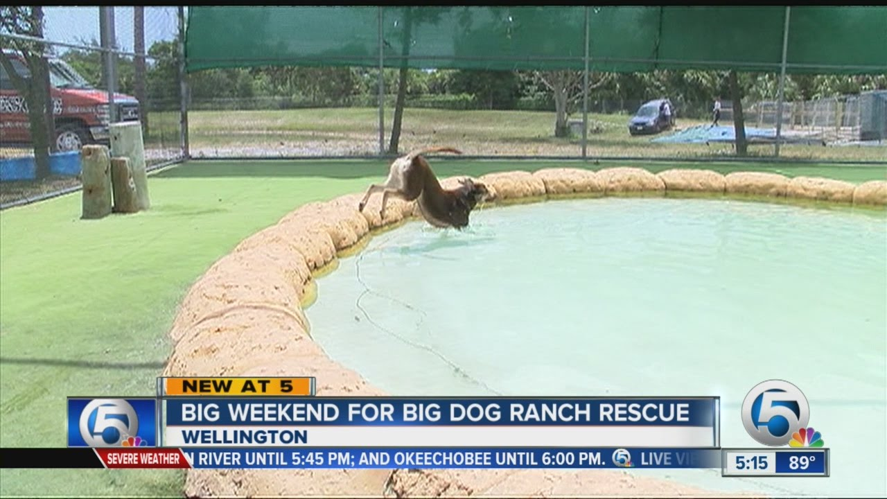 Dog Rescue Wellington