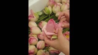 Подготовка цветка лотоса к составлению букета