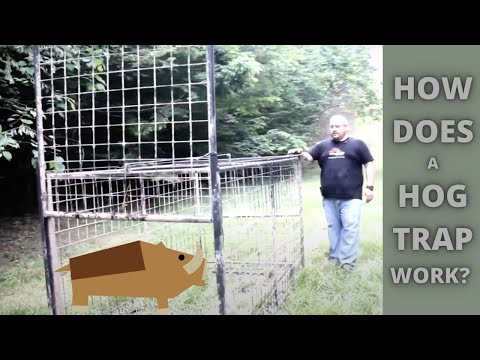 How Does A Wild Hog Trap Work? Guillotine Trap Door 101