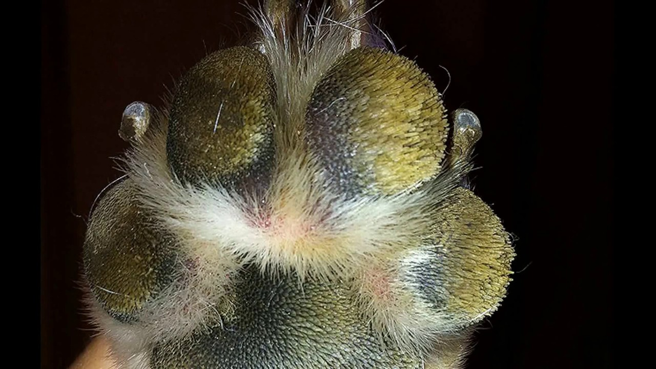 Dog Breeds With Hairy Paws