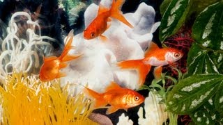 What To Do If A Fish Dies In The Tank | Aquarium Care