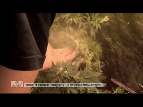 Enquête d'action - Fumeurs et planteurs, les dessous du canna-business