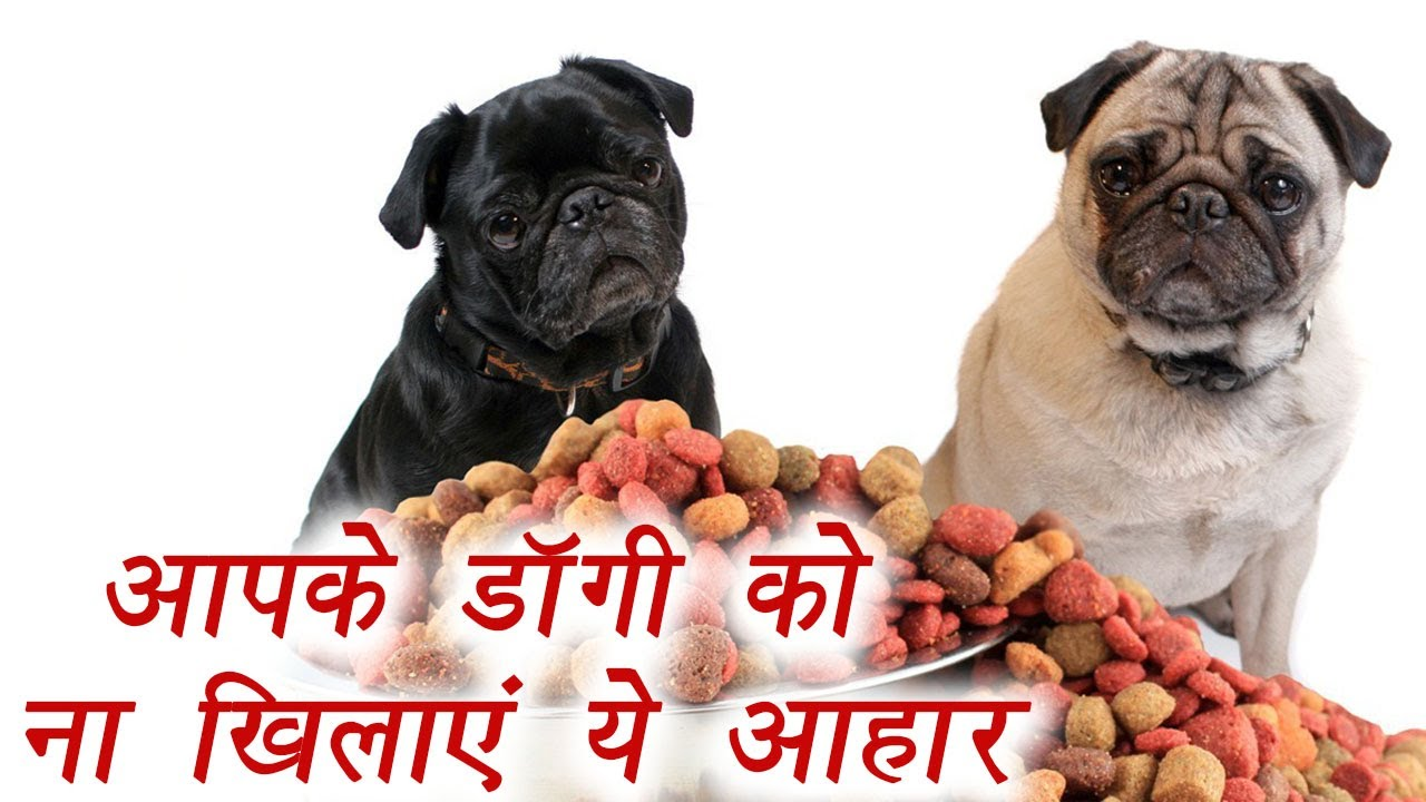 Foods That Your Dogs Shouldn T Eat य ख न आपक