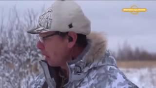 Охота на кабана и волка Охотничьи экспедиции