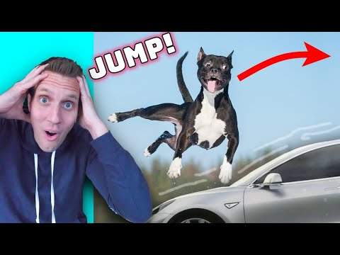 The Most INSANE DOG TRICKS That Will Blow Your Mind !