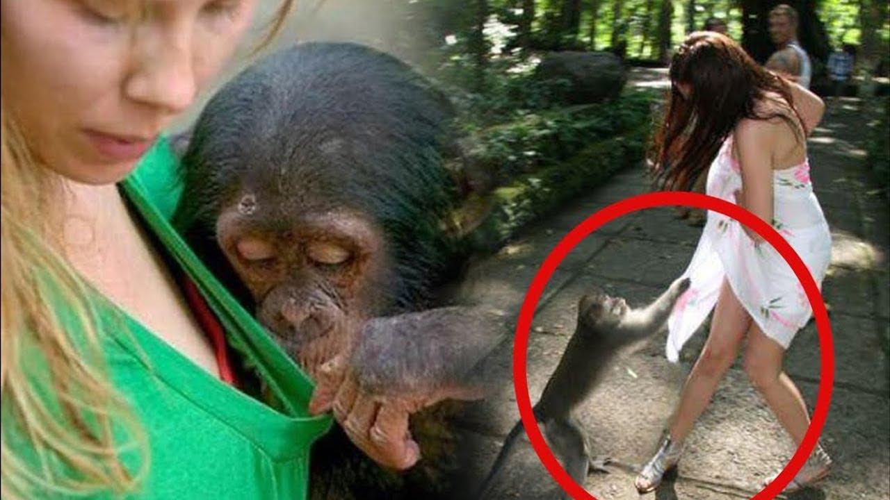 Maymunların Davranışları İnsanları Zor Duruma Düşürdü - Bunları İzlemelisiniz.