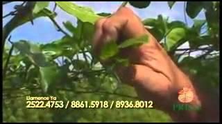 Fertilizante quelatado