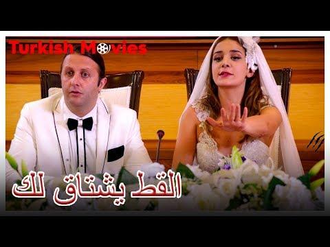 القط يشتاق لك - كوميديا رومانسية - ترجمات عربية