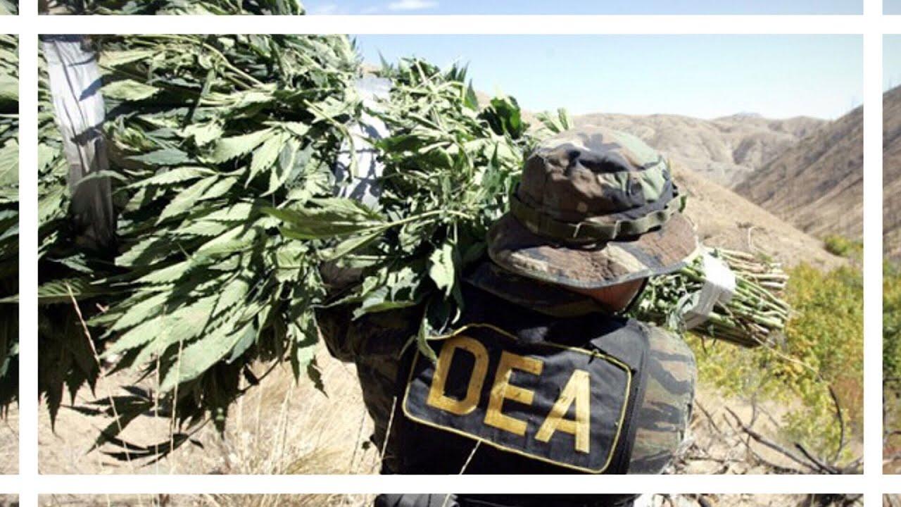 DEA WON'T RESCHEDULE CANNABIS | News Nug | CoralReefer