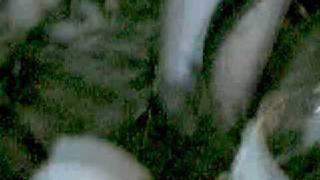 KP1: stray kitten love mash