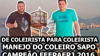 MANEJO DO COLEIRO SAPO CAMPEÃO DA FEEPAERJ   Mago dos Coleiros