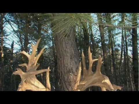 Bass Pro Shops King of Bucks Tales of the Kings Hill Gould 720p 16x9
