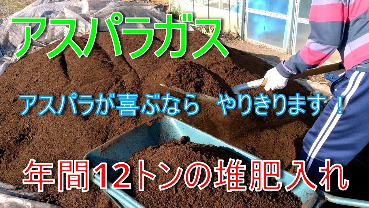 【アスパラガス】【栽培】【家庭菜園】今年二回目の堆肥入れ始めました!2021/06