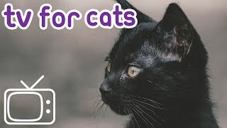 Cat TV: Videos for cats! Help Entertain your Kitty!