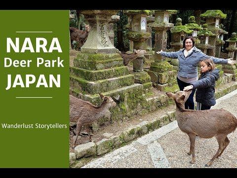 A Visit to Nara Deer Park Japan | Wanderlust Storytellers