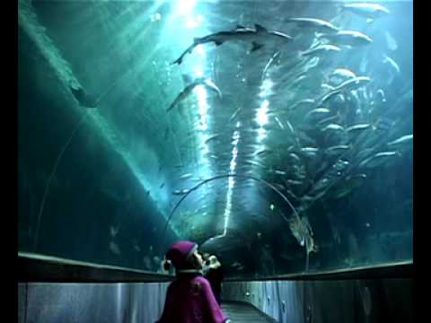 Aquarium Of The Bay Sf Citypass Attraction Youtube