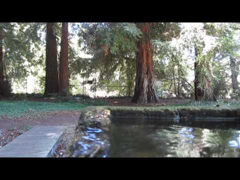 OOTD and Sunset garden tour