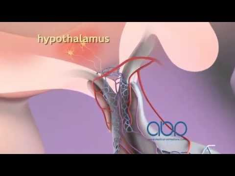 Female Reproductive System - YouTube