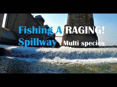 Mcalpine Dam Fishing The Upper Gates
