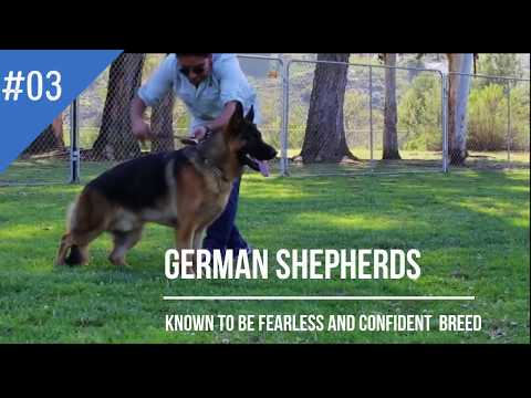 Top 10 Most Dangerous Dogs breed
